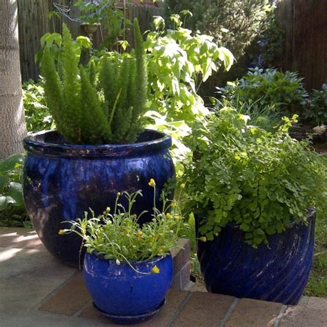 potted plant ideas grouping potted plants together plant