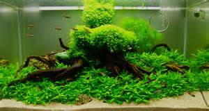 aquarium aquascape design ideas decosee