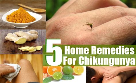 5 simple home remedies for chikungunya diy martini