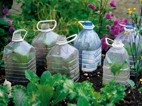 garden in a bottle cloches and cold frames diy