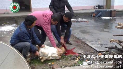 muslim friends   village  buy halal goat youtube