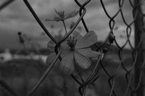 imagenes a blanco y negro tumbrl flor blanco tumblr