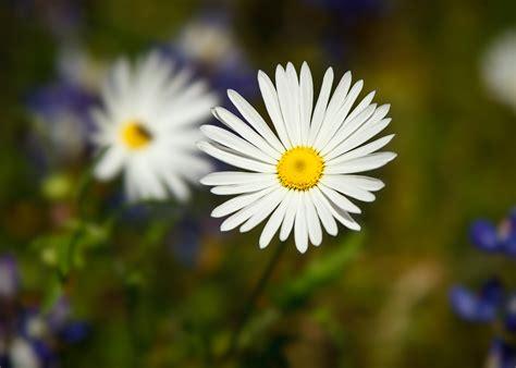 for flowers summer flower flowers