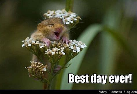 Best Day Meme - best day ever funny flower meme picture