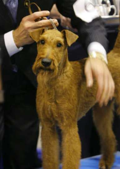fire house dogs irish terrier cast as hero in the 2007 movie firehouse dog and photo photo 22382 houston