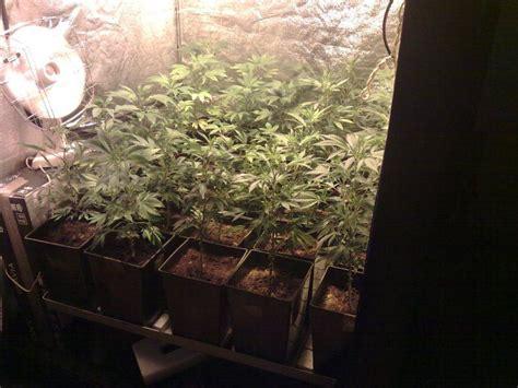 culture de cannabis en sog sea of green du