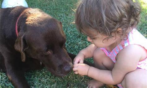 dogs don t like hugs dogs don t like hugs according to new study kidspot