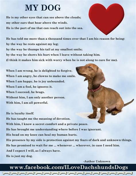 my puppy my poem ode to dogs my boys baby and boys