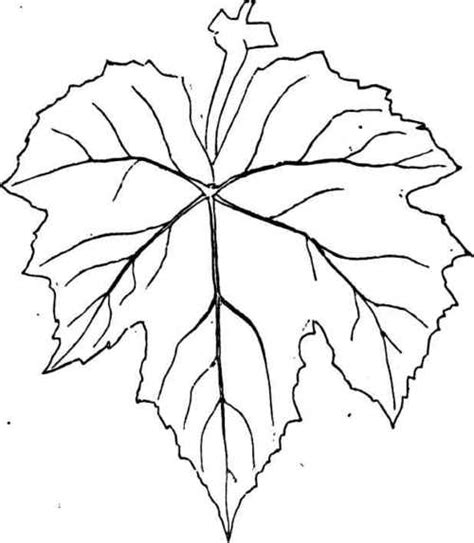 Grape Leaves Coloring Pages | grape leaves