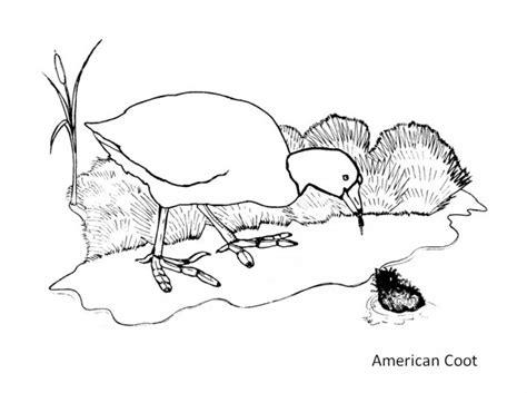 gruiformes cranes coots natureglos escience birds
