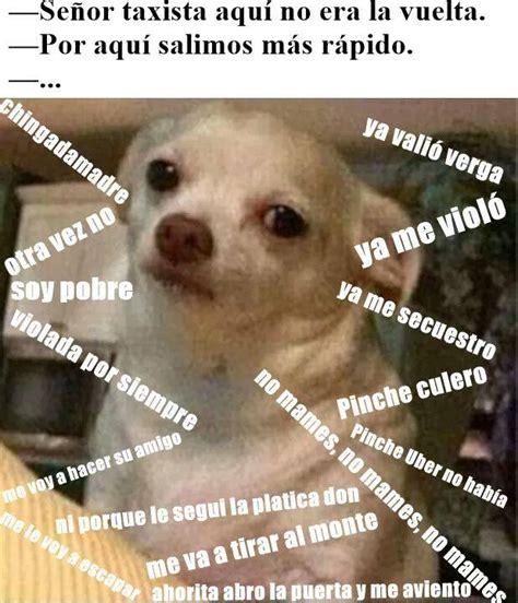 Memes De Chihuahua - memes perro chihuahua enojado google search humor