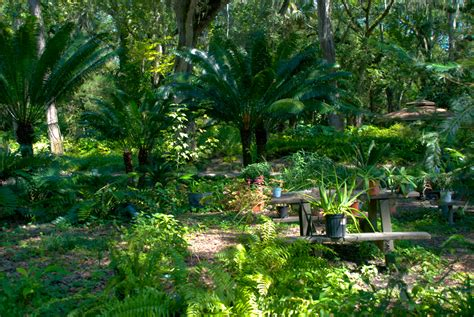 Sugar Mill Botanical Gardens Sugar Mill Gardens Florida Hikes