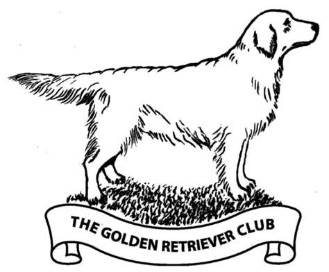 where did golden retrievers originate golden retriever breed origin merry photo