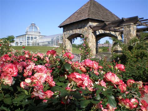Ginter Botanical Gardens A Lover Of Roses Lewis Ginter Botanical Garden