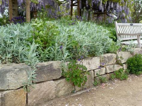 garten pflanzen die wenig wasser brauchen pflanzenwahl bei trockenheit mein sch 246 ner garten