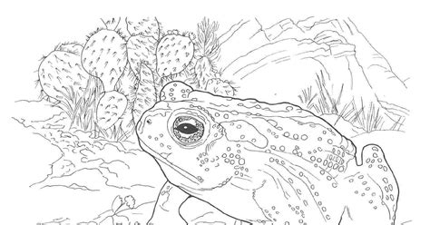 printable desert animal coloring pages printable coloring pages desert animals bark scorpion