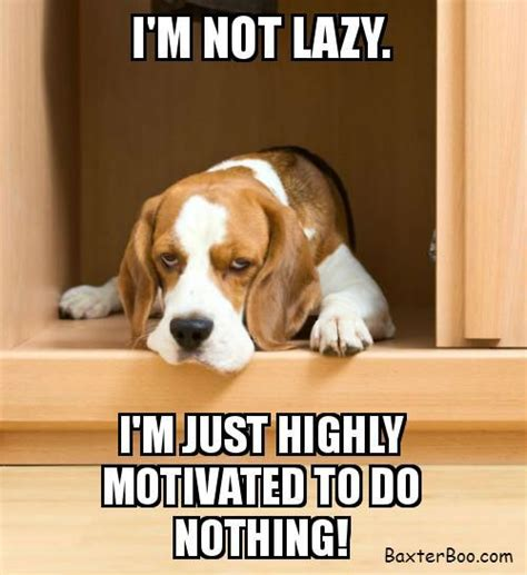 Beagle Meme - 25 best ideas about funny dog sayings on pinterest