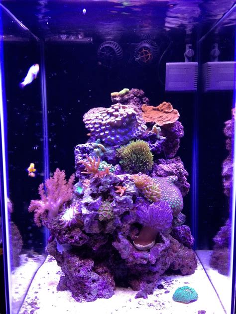 best fan for aquarium 55 best aquarium decor ideas images on pinterest fish