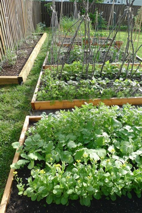 best 25 vegetable garden layouts ideas on