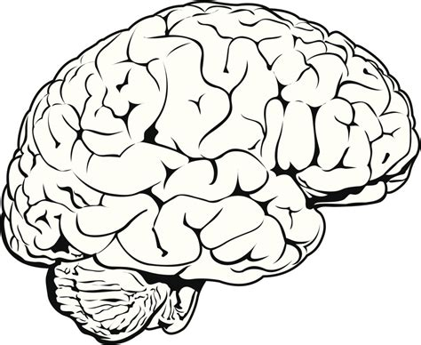 how to do doodle drawings how do you draw a brain brain drawing clipart best