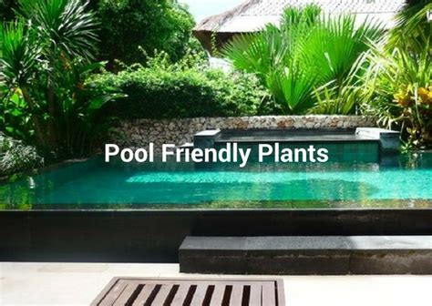 Courtyard Ideas by What To Plant Around A Swimming Pool Albatross Swimming