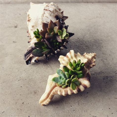 Conch Shell Planter by Sea Shell Planter Ideas To Show Your Plants Ideas