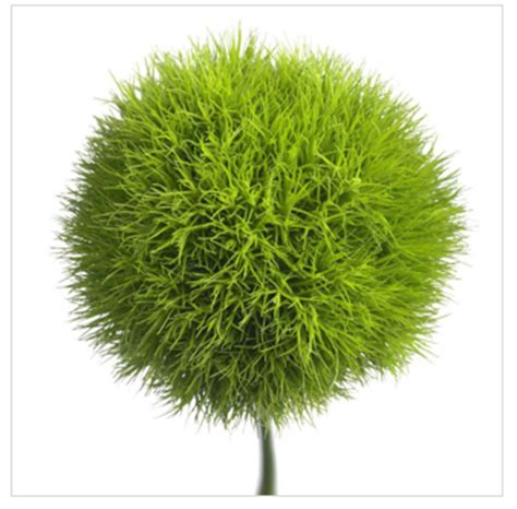 Bamboo Garden Bowling Green Oh by Interesting Plant Dianthus Barbathus Green Ball Or