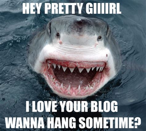 Sad Shark Meme - 15 jaws dropping shark memes circling the web