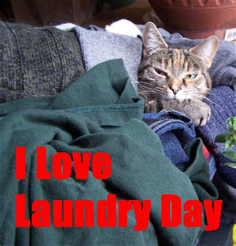 humorous  silly cat photographs  captions