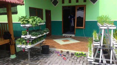menanam hidroponik rumahan tanaman hidroponik untuk mempercantik rumah tips dan