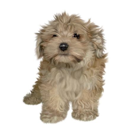 puppy png free puppy png stock by janeeden on deviantart