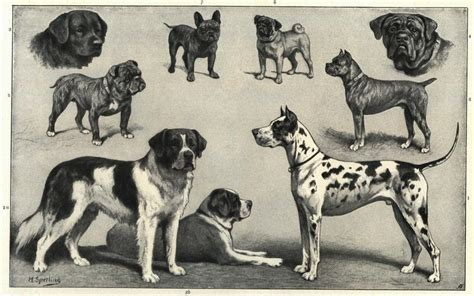 ancient dogs modern breeds genetically disconnected from ancient ancestors 171 news