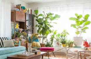 living room plant 10 cheerful living room ideas with plants covet edition