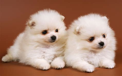 baby and puppy pictures dogs with babies www imgkid the image kid has it