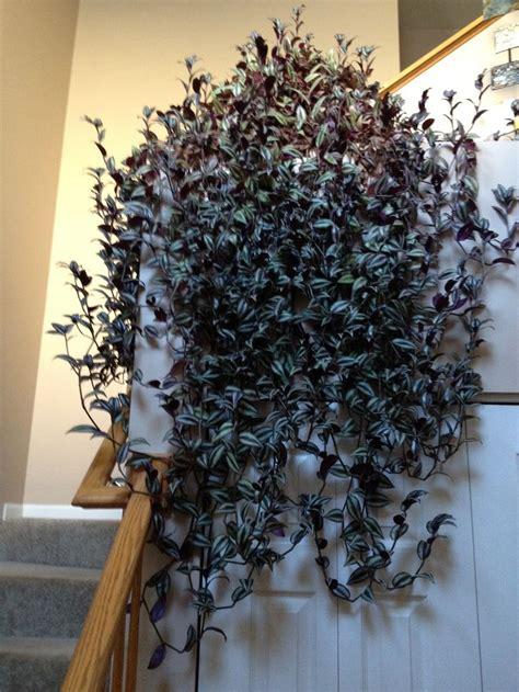 pin   plants