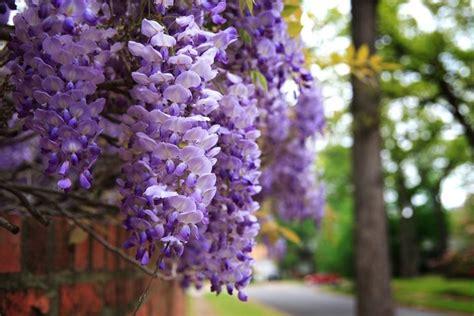 simbolo dei fiori fiori dell amicizia significato dei fiori fiori