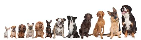 most popular house dogs 2014 most popular puppy names