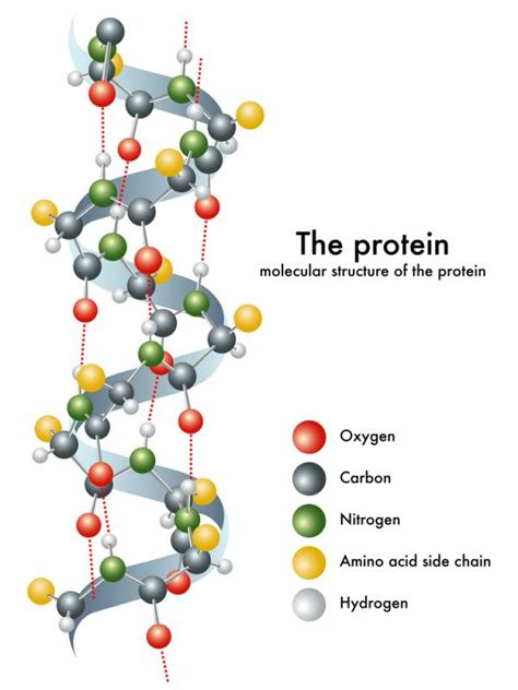 What Does Much Protein Do How Much Protein Do You Need Science Weighs In Breaking