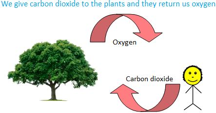 How Do They Make Paper Out Of Trees - uses of plants plants as food plants as medicines