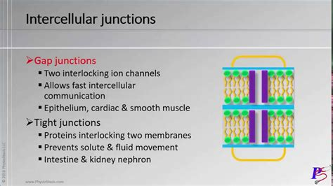 chapter   cell video  plasma membrane structure