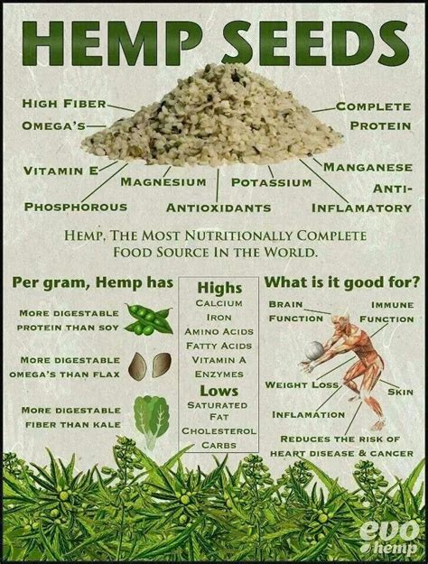 Chlorophyll Detox Thc by The Amazing Benefits Of Hemp Seeds Infographic