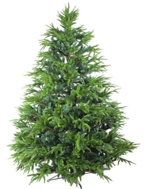 the best water for a christmas tree