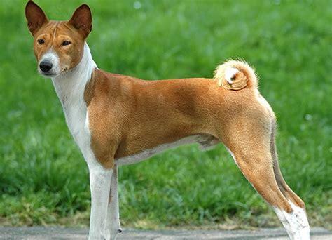 Hybrid Dog Breeds A Z   www.imgkid.com   The Image Kid Has It!