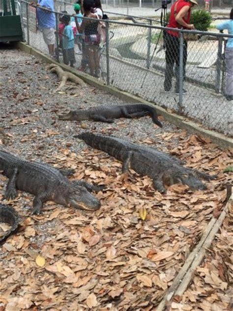 arkansas alligator farm petting zoo hot springs top