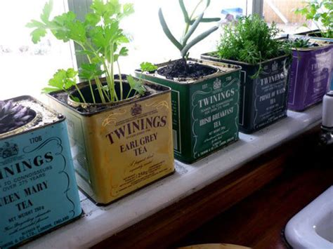 kitchen herbs invigorate your kitchen with an indoor herb garden