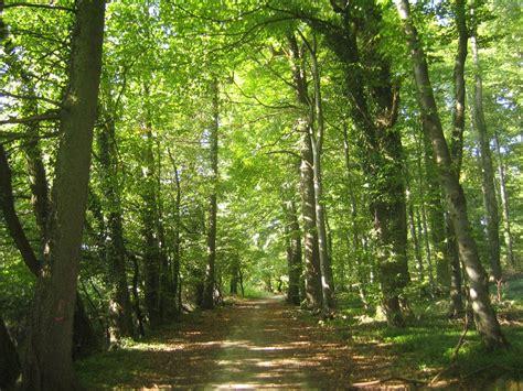 el bosque de los heidy robles en el bosque retahilas