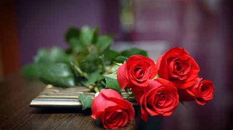 Best Backgrounds Rose Wallpaper | best red roses wallpapers natural full hd download free