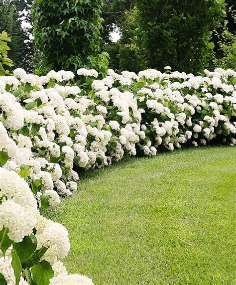Wanneer Snoeien Hortensia by Simple Garden Landscaping With Wanneer Snoeien Hortensia