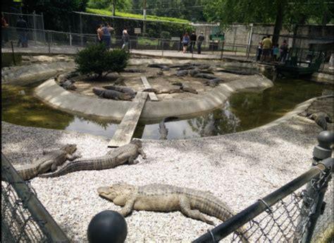 real life adventure   arkansas alligator farm