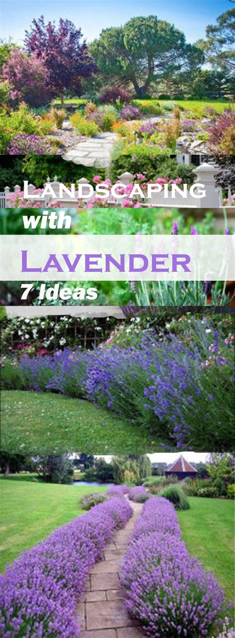 house garden design landscaping with lavender 7 garden design ideas